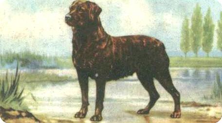 rottweiler-1936_artikel
